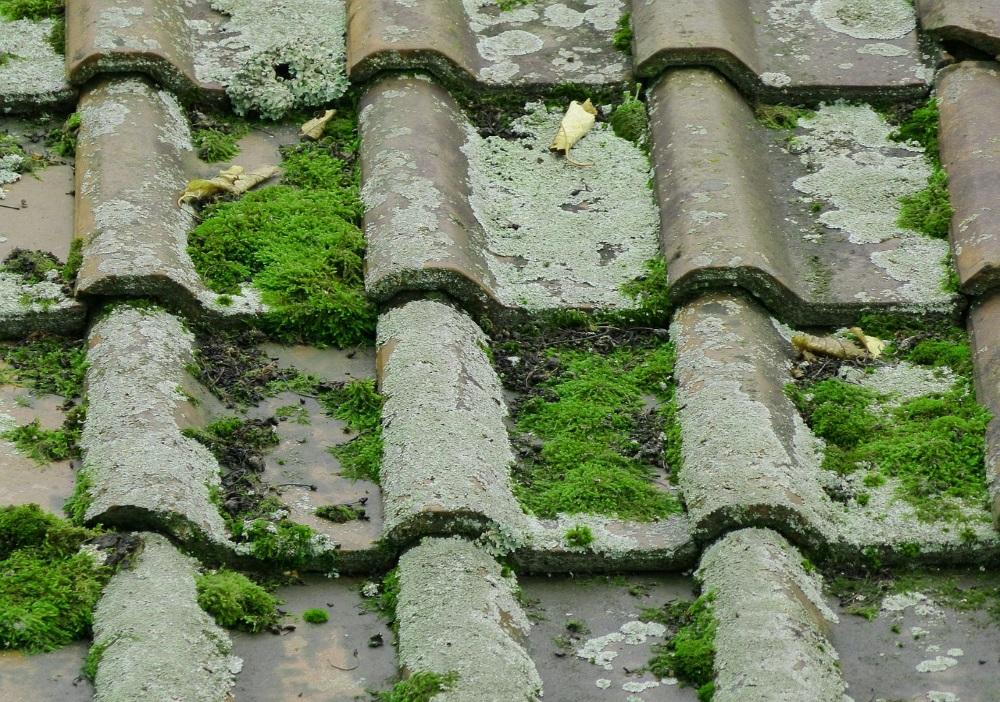 demoussage toiture var - artisan couvreur david inglese